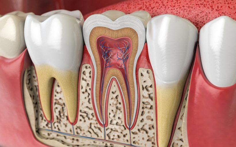 Ápice dental, Glosario BQDC