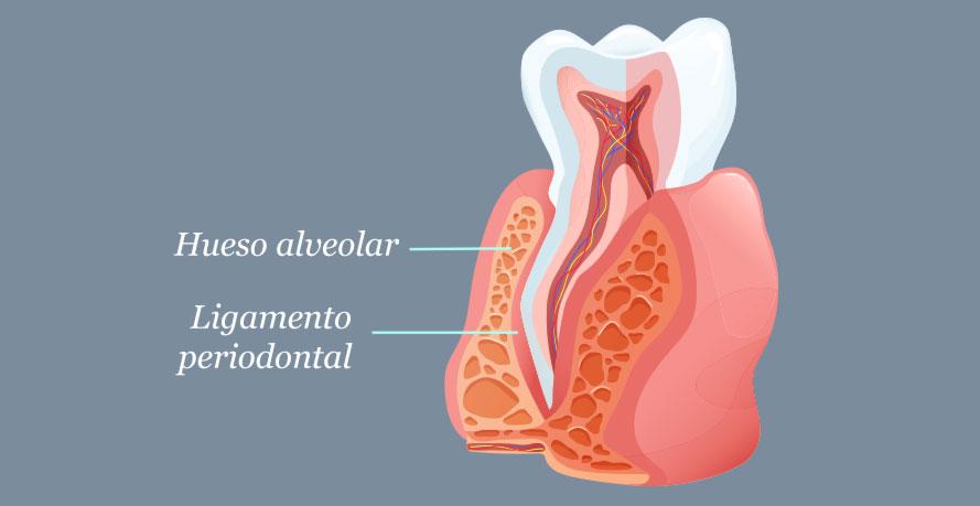Osteoplastia (Glosario BQDC)